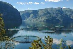 Łososiowy gospodarstwo rolne w fjord w Norwegia Obraz Stock