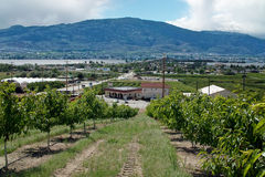 Osoyoos Orchard, Okanagan, BC, Canada Royalty Free Stock Photos