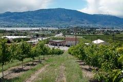 Osoyoos Orchard, Okanagan, BC, Canada royalty free stock photos