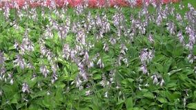 Ospiti i fiori di estate in un grande letto di fiore nel parco video d archivio