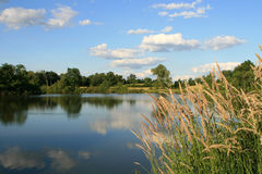 osprey озера Стоковое Изображение RF