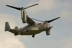 osprey Стоковые Фото