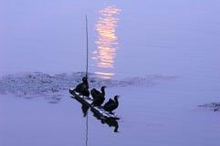 Osprey betriebsbereit zum Fischen Stockbild