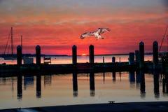 Osprey desciende sobre un puerto del norte del pueblo de la Florida mientras que la puesta del sol se acerca Foto de archivo libre de regalías