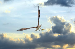 Osprey flying in clouds at sunset with fish in talons Royalty Free Stock Photos
