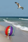 Osprey Flying over a Beach Ball on the Beach Royalty Free Stock Photography