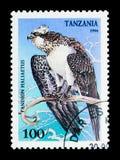 Osprey (haliaetus Pandion), πουλιά του θηράματος serie, circa 1994 Στοκ Φωτογραφίες