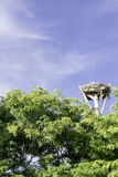 Osprey Nest. Located at Sanibel Island, Florida - USA Royalty Free Stock Photo