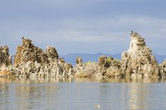 Osprey nesting on top of tufas Royalty Free Stock Images