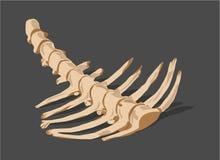 Ossa animali della spina dorsale illustrazione di stock