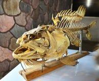 Ossa di pesce immagini stock libere da diritti