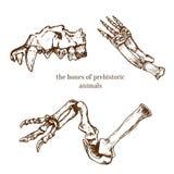 Ossa preistoriche imprecise degli animali Scavi di archeologia Illustrazione di vettore Fotografia Stock Libera da Diritti