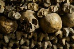 Ossa, scheletri e crani Immagini Stock
