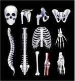 Ossa umane, sul nero Fotografia Stock Libera da Diritti