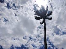 Osservando al cielo Fotografie Stock Libere da Diritti