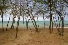 Osservando sulla spiaggia Immagine Stock