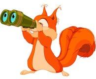 Osservatore dello scoiattolo Fotografie Stock