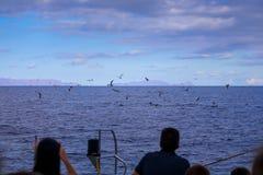 Osservazione dei dolfins in natura Immagine Stock