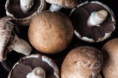 Osservi da sopra sul fondo dei funghi Immagine Stock Libera da Diritti