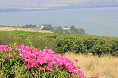 Osservi dalla collina di beatitudini al villaggio di Capernaum Fotografia Stock