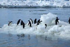 Osservi dalla spiaggia un il gruppo di pinguini del adelie su ghiaccio di galleggiamento immagini stock