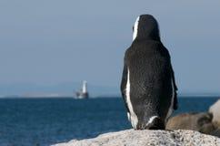 Osservi fuori il pinguino Immagini Stock Libere da Diritti