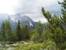 Osservi il fron una cima della montagna su un bello paesaggio dei moutains delle dolomia e su una foresta di conifere di gree nel Fotografia Stock Libera da Diritti