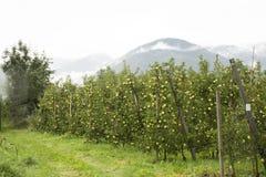 Osservi il paesaggio del villaggio del tiroler di Oetztal e della montagna con l'azienda agricola di Apple Fotografie Stock Libere da Diritti