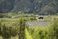 Osservi il paesaggio del villaggio del tiroler di Oetztal e della montagna con l'azienda agricola di Apple Immagini Stock