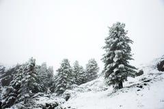 Osservi la nevicata della neve del paesaggio coperta sul pino in cima al supporto Immagine Stock Libera da Diritti