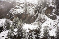 Osservi la nevicata della neve del paesaggio coperta sul pino in cima al supporto Fotografie Stock Libere da Diritti