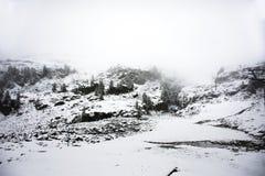 Osservi la nevicata della neve del paesaggio coperta sul pino in cima alla montagna Immagini Stock Libere da Diritti
