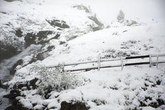 Osservi la nevicata della neve del paesaggio coperta sul pino in cima alla montagna Fotografia Stock