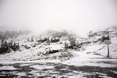 Osservi la nevicata della neve del paesaggio coperta sul pino in cima alla montagna Immagine Stock