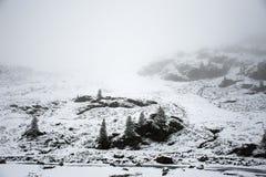 Osservi la nevicata della neve del paesaggio coperta sul pino in cima alla montagna Fotografie Stock Libere da Diritti