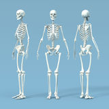 osso illustrazione di stock