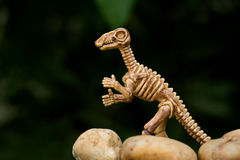 Osso de dinossauro no estilo do close-up Imagem de Stock