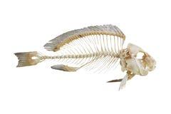 Osso de peixes Fotos de Stock