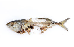 Osso de peixes Imagem de Stock Royalty Free