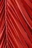 Osso de peixes de oscilação pontudo como a folha da palmeira com teste padrão simétrico bonito Cor coral viva na moda imagens de stock royalty free