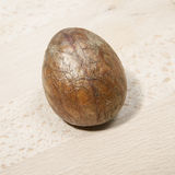 Osso dell'avocado su un bordo di legno Immagini Stock