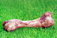 Osso di cane Immagine Stock