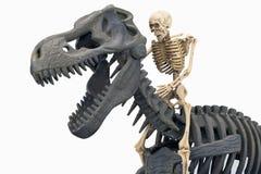 Osso di dinosauro con il cavaliere Fotografia Stock Libera da Diritti