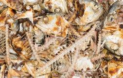 Osso di pesce dello sgombro dell'ustione per il gatto Fotografia Stock