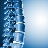 Osso espinal humano 3d Imagens de Stock Royalty Free