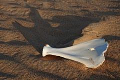 Osso no deserto Imagens de Stock