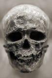 Osso umano del cranio Immagine Stock Libera da Diritti