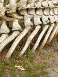 Ossos da baleia e do caranguejo Fotografia de Stock Royalty Free