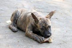 Ossos da roedura do cachorrinho no assoalho concreto imagens de stock