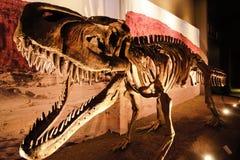 Ossos de dinossauro na reserva natural Ischigualasto fotos de stock